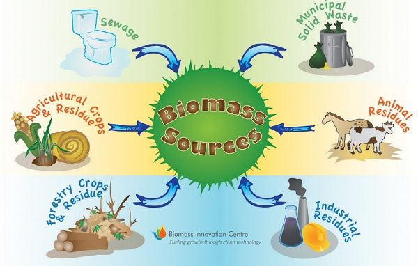 The Top 10 Countries Who Produce the Most Biomass Energy