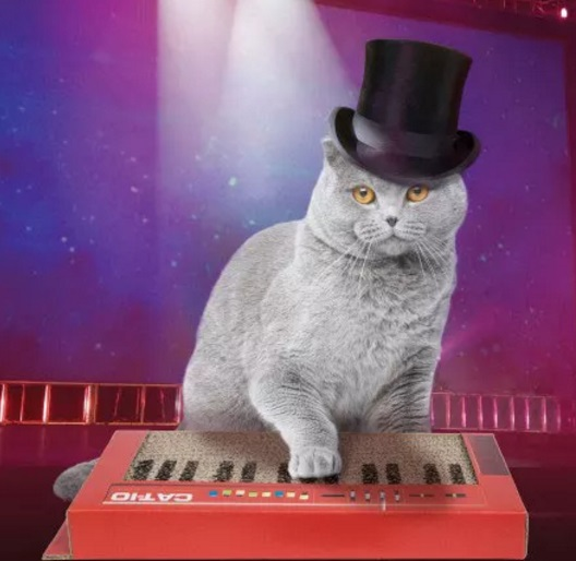 Cat Scratching Keyboard