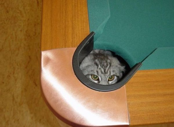 Cat in a Pool Table