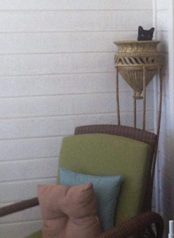 Cat in a Vase