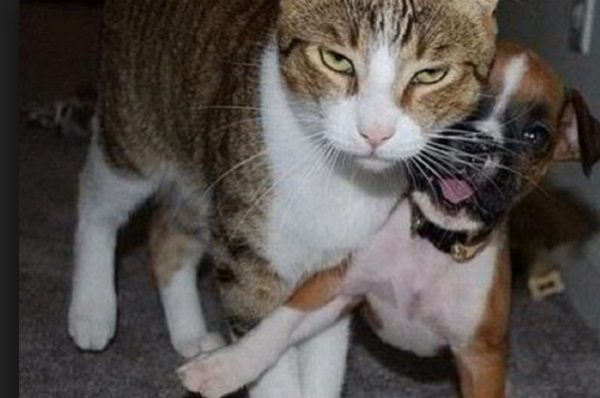 Ten Cats Who Hate Dogs and Are Not Afraid to Show It