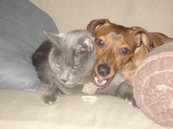 This Cat Hates The Dog
