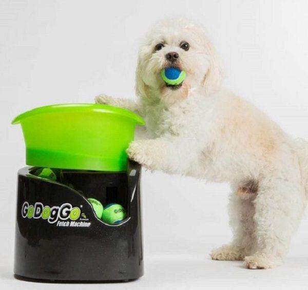 GoDogGo Junior Fetch Machine
