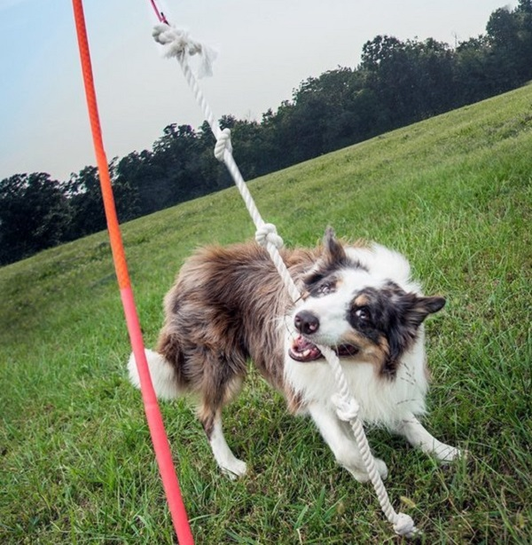 Tether Tug For Dogs