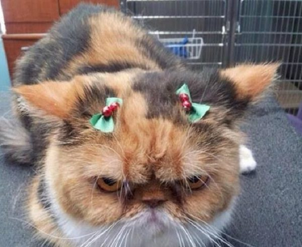 This Cat Is Not Amused