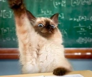 Ten Cats Who Love Attending Schools and Universities