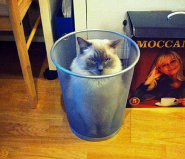 Cat Hiding in a Waste Paper Bin