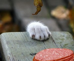 Ten Very Naughty Cats Who Are About to Steal Your Food