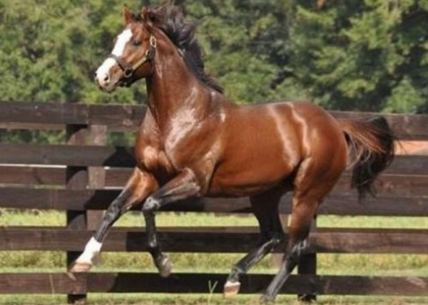 The Green Monkey Thoroughbred Racehorse