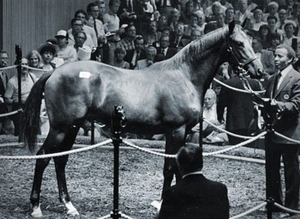 Imperial Falcon Thoroughbred Racehorse