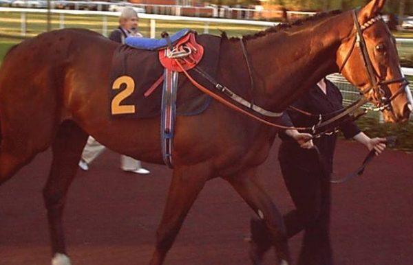 Jareer Thoroughbred Racehorse