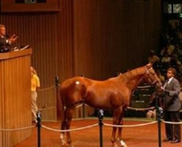 Laa Etaab Thoroughbred Racehorse