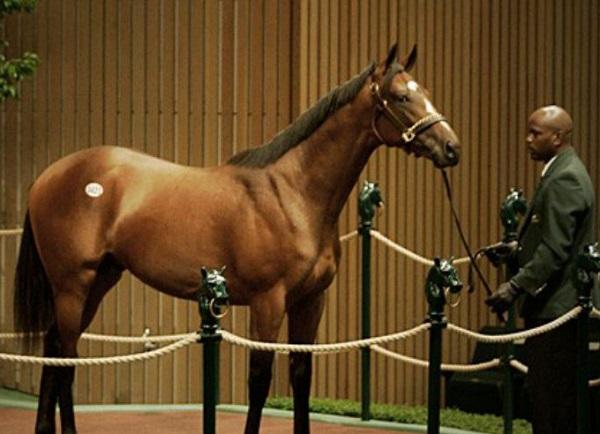 Meydan City Thoroughbred Racehorse