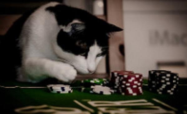 Social Betting