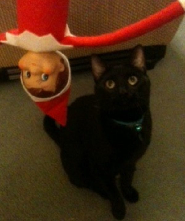 This Cat Thinks the Elf on the Shelf Is Nothing but Trouble