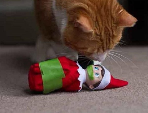 This Cat Thinks the Elf on the Shelf Needs to Go