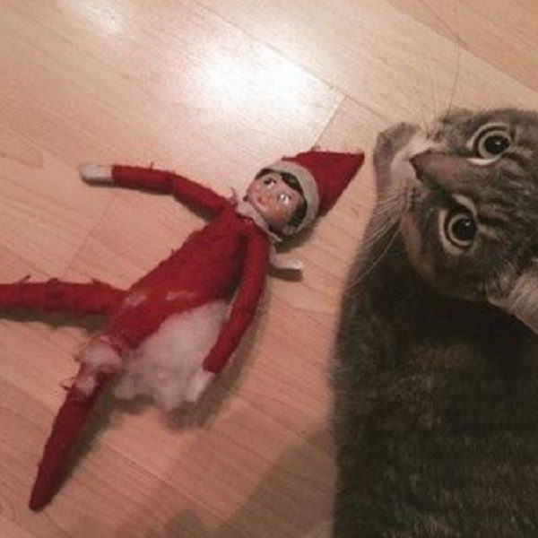 This Cat Thinks the Elf on the Shelf Isn't Tasty