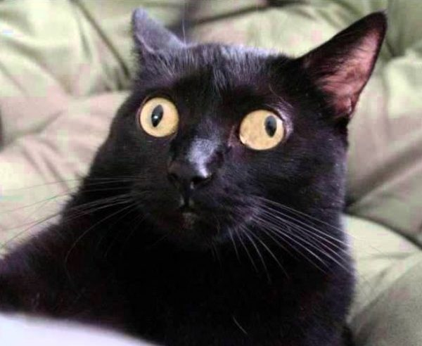 Cat Gone Full Derp