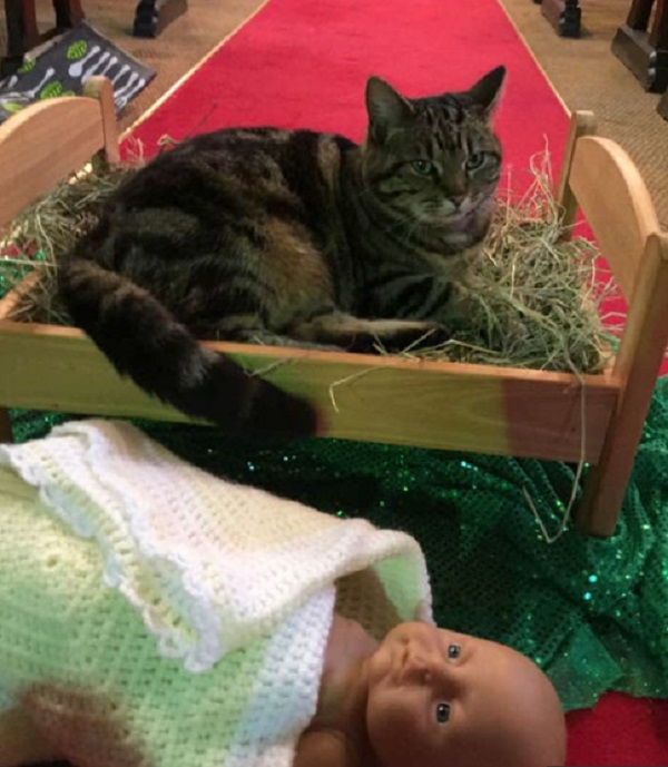 Cat Destroying Christmas Manger