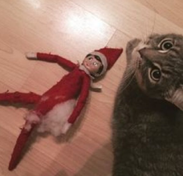 Cat Destroying Elf on the Shelf