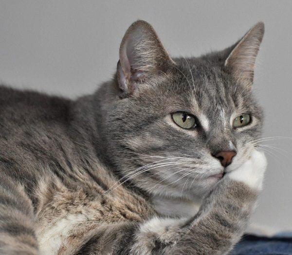 Cat Thinking