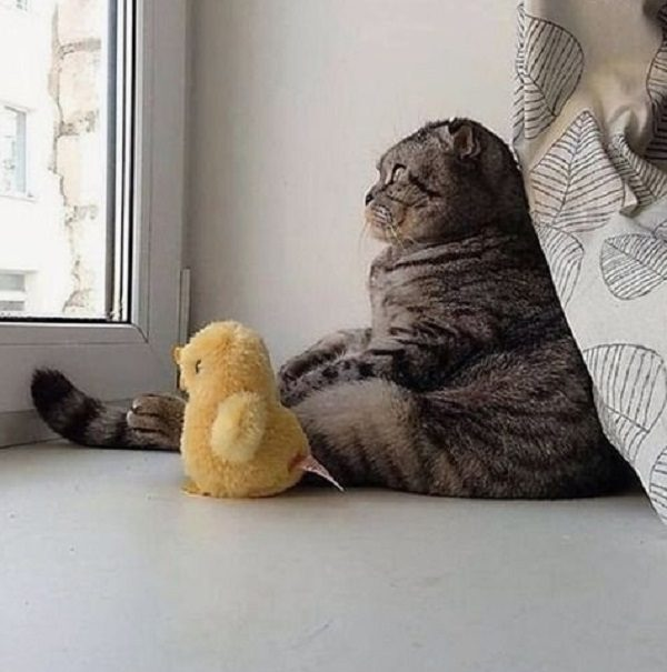 Super Lazy Cat