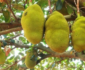 Ten of the Worlds Craziest Looking Fruit and What They Taste Like