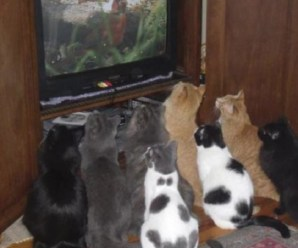 Ten Cats Who Hog the TV Remote and Control What Theirs Watch
