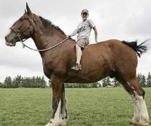 Ten of the Worlds Tallest Animals (Record-breaking Animals)