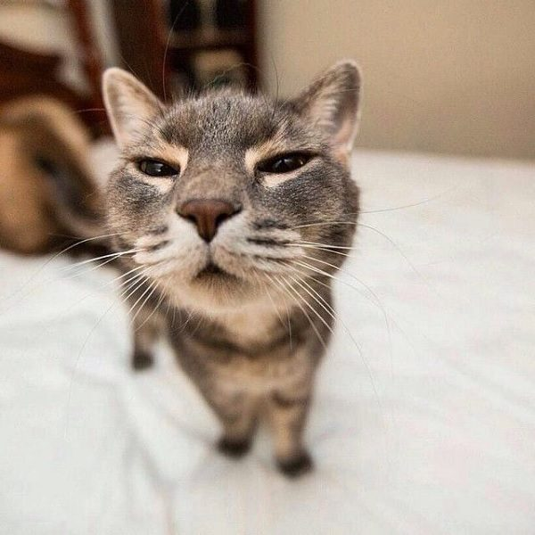 This Cat Knows You Farted