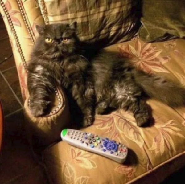 Cat Hogging the TV Remote