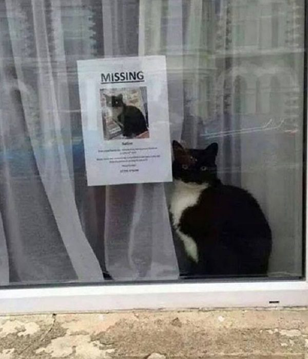 Cat Not Missing