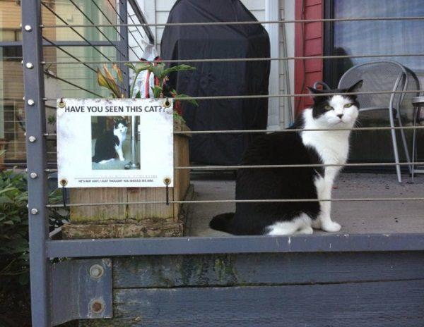 Cat Not Missing