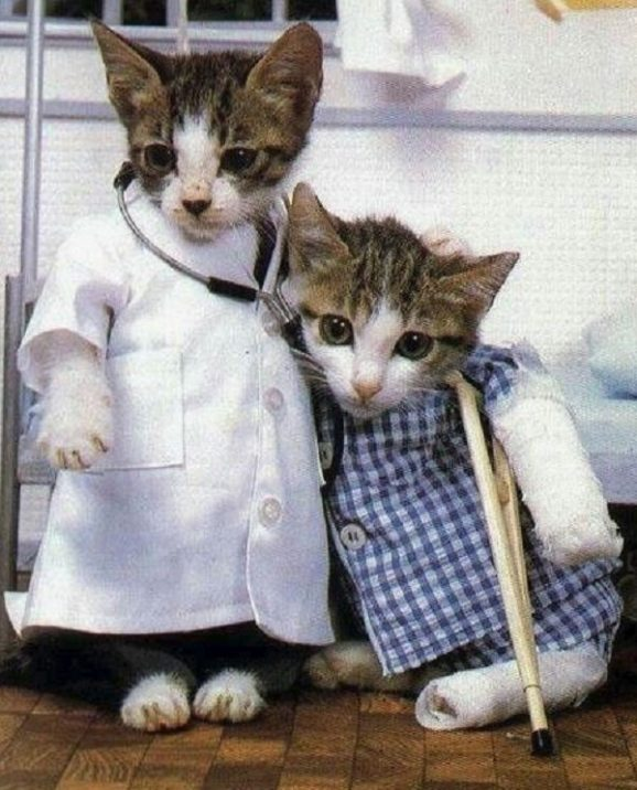 Image result for cats being doctors