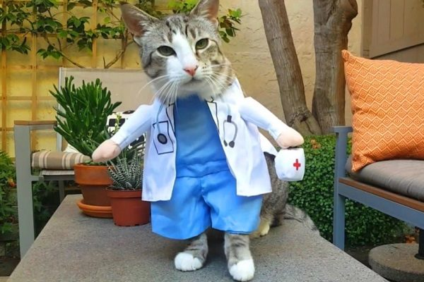 Cat Role-Playing as a Doctor