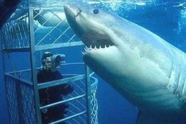 Ten of the Longest Species of Sharks in the World