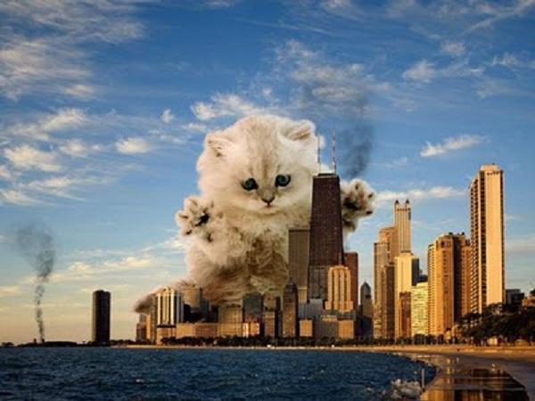 Cat Destroying City