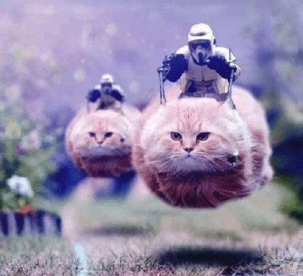 Cat Turned into a StarWars Speeder