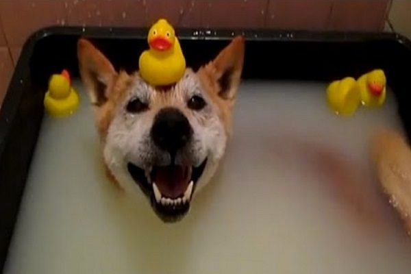 Dog enjoying its bath