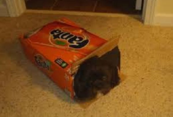 Dog Inside a Box of Fanta