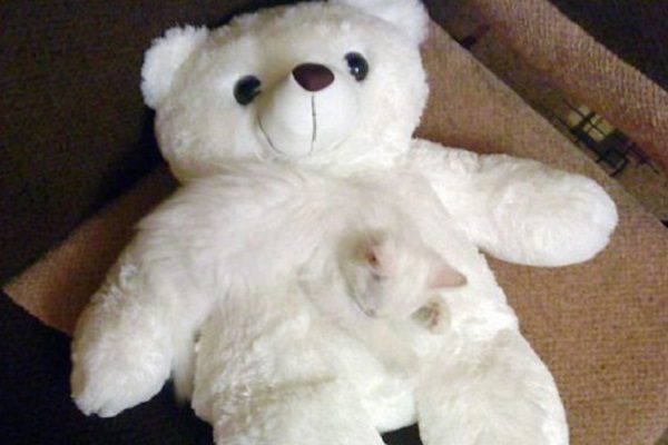 Ten White Cats Blending in With Their Surroundings
