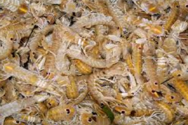 Are Crustaceans the Most Abundant Type of Animal on Earth?