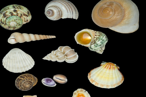 Are Molluscs the Most Abundant Type of Animal on Earth?