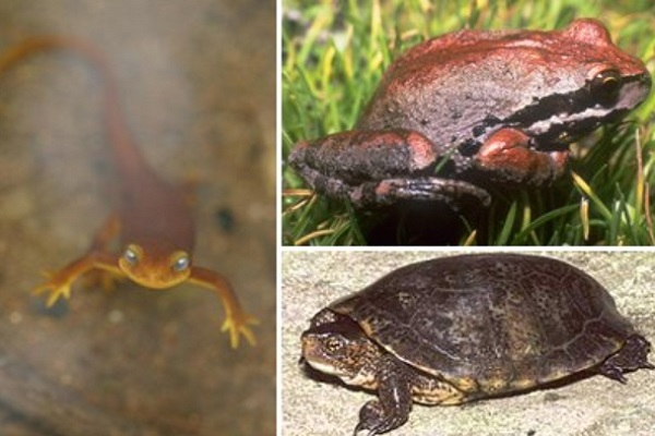 Are Amphibians the Most Abundant Type of Animal on Earth?