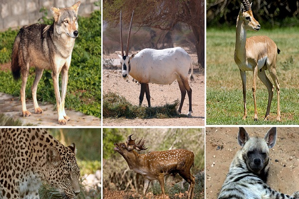 Are Mammals (excluding us humans) the Most Abundant Type of Animal on Earth?