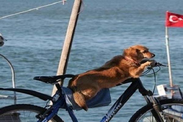 Dog Riding a Bike