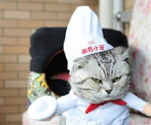 Ten Foodie Loving Cats Who Dream of Becoming Professional Chefs