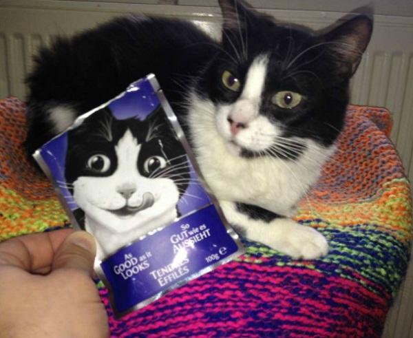 Cat Next to Cat Food Carton