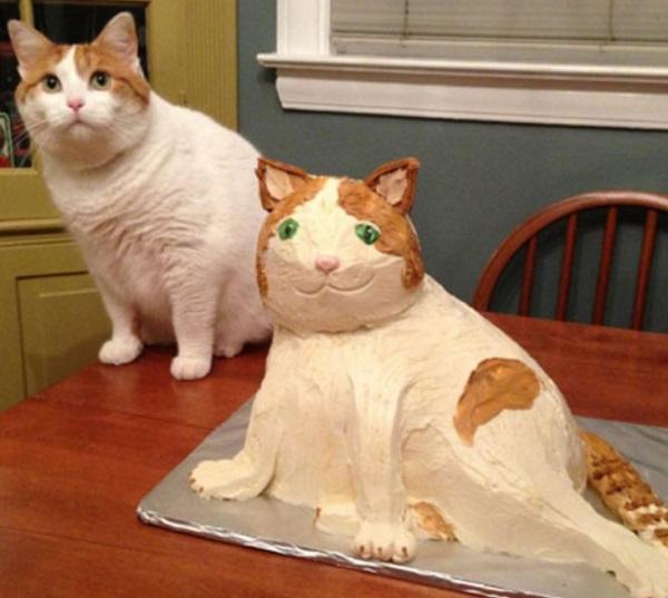 Cat Next to Cat Cake
