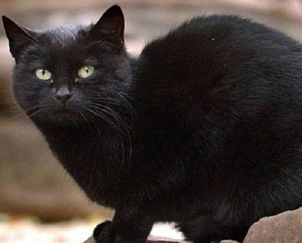 Blackie, the World's Wealthiest Cat